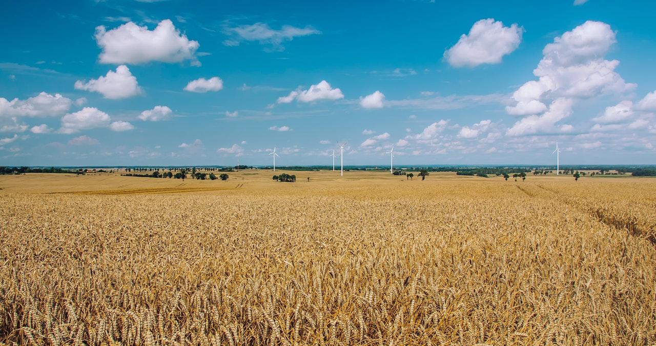 éoliennes terrain agricole